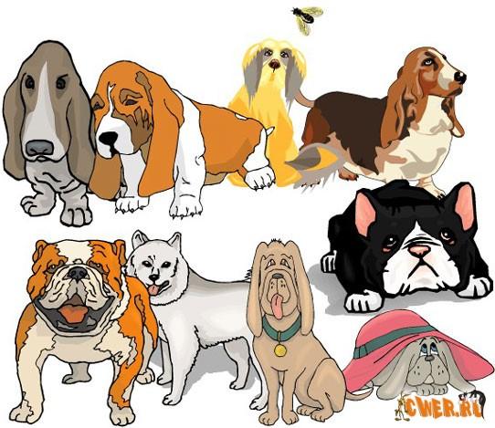 Большая коллекция собачек