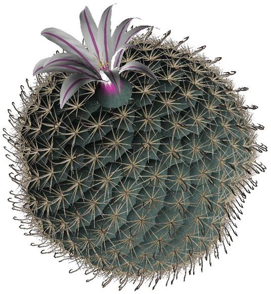 Растения пустыни
