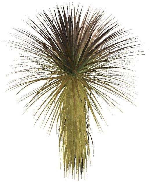 Растения пустыни - Клипарты, JPG ...: cwer.ws/node/12391