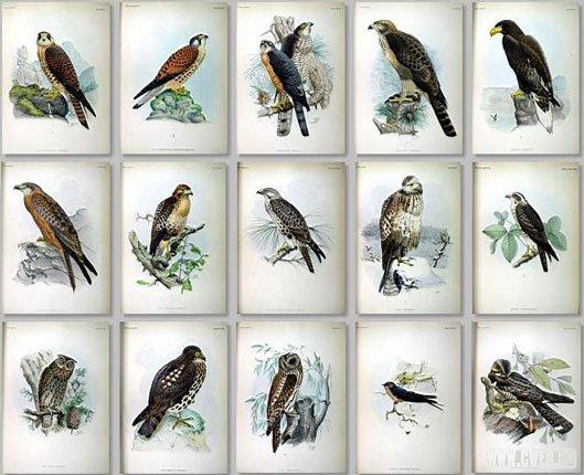 Коллекция птицы